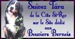 Le Bouvier Bernois. Photos, infos, Forum ... Tout sur le Bouvier Bernois